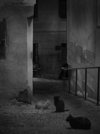 Noche de gatos